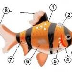 болезни рыбок аквариумных