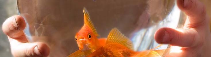 аквариум для начинающих аквариумистов