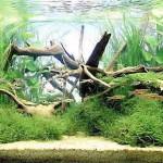 болезни аквариумных растений