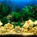 подготовка аквариума