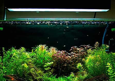 подсветка для аквариума