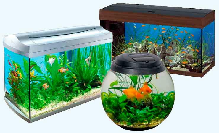 Как выбрать аквариум. | Начинающим аквариумистам