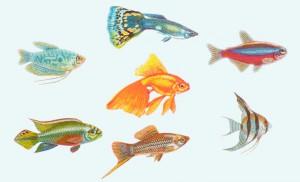 выбор рыбок