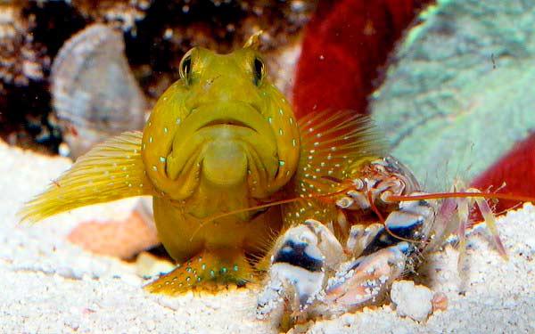 рыбки и креветки в одном аквариуме