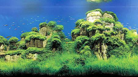 оформление Вашего аквариума