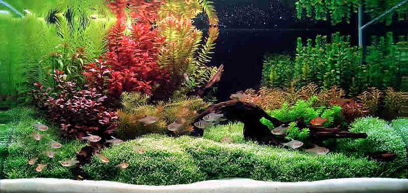 Аквариумные растения, растения для аквариума
