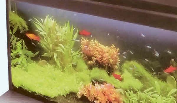 zapusk-akvariuma1