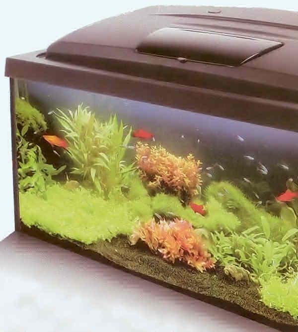 Запуск Вашего первого аквариума