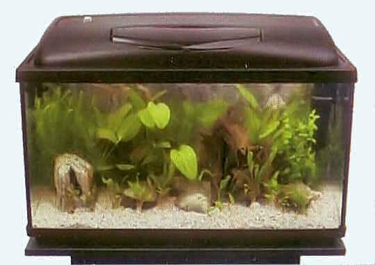 запуск аквариума - 4-й день - посадка первых растений