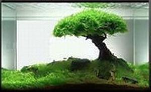 дерево из яванского мха