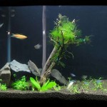 bonsaj-v-akvariume