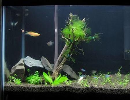 как сделать бонсай в аквариум