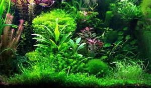 rastenija-dlja-akvariuma