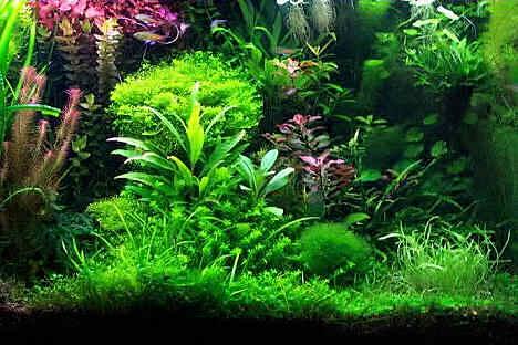 растения для первого аквариума